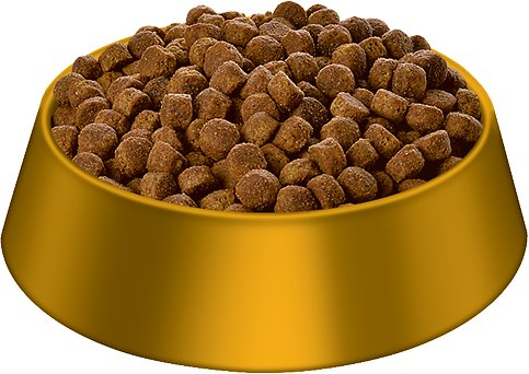 Dry Dog Food For Small Dogs