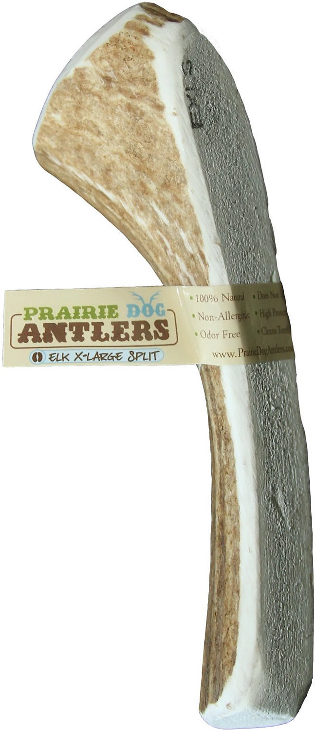 prairie dog elk antler splits dog chews x large. Black Bedroom Furniture Sets. Home Design Ideas