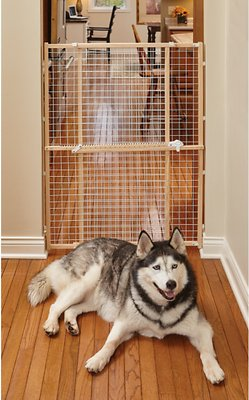 Midwest Wood Wire Mesh Pet Gate 44 In Chewy Com