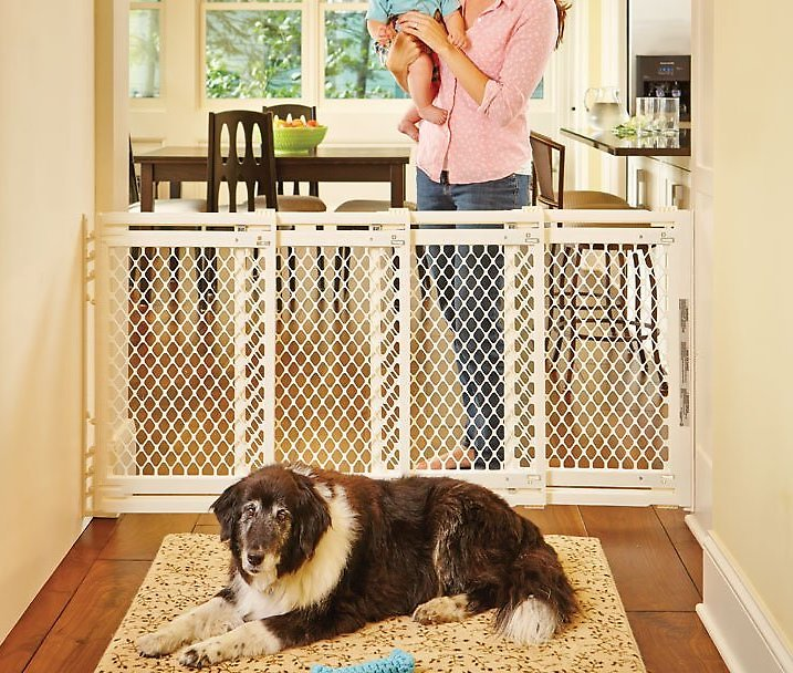 Mypet Plastic Extra Wide Pet Gate For Dogs Amp Cats Chewy Com
