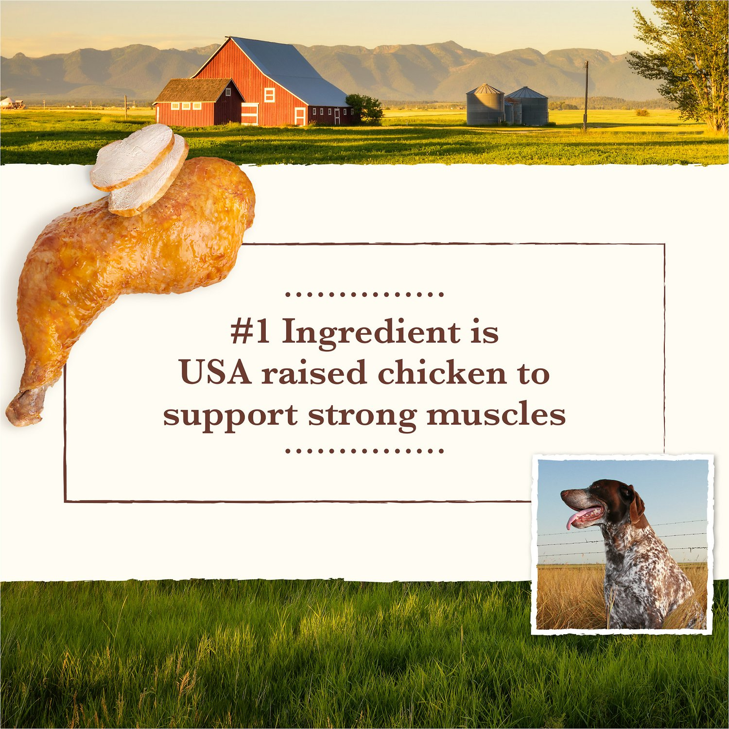Eagle Dog Food Ingredients