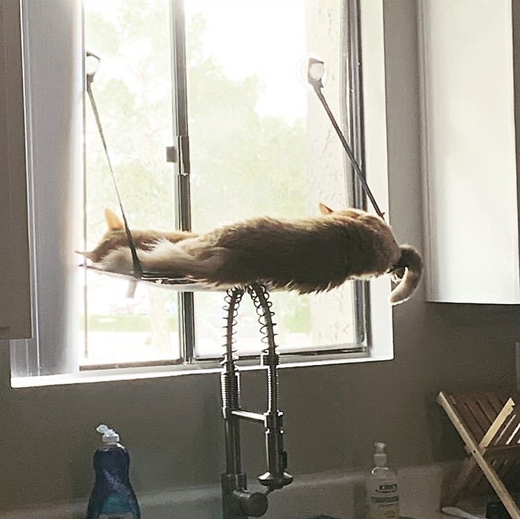 Deluxe Kitty Sill With Bolster Window Cat Bed Ez Mount Perch Indoor Seat Shelf
