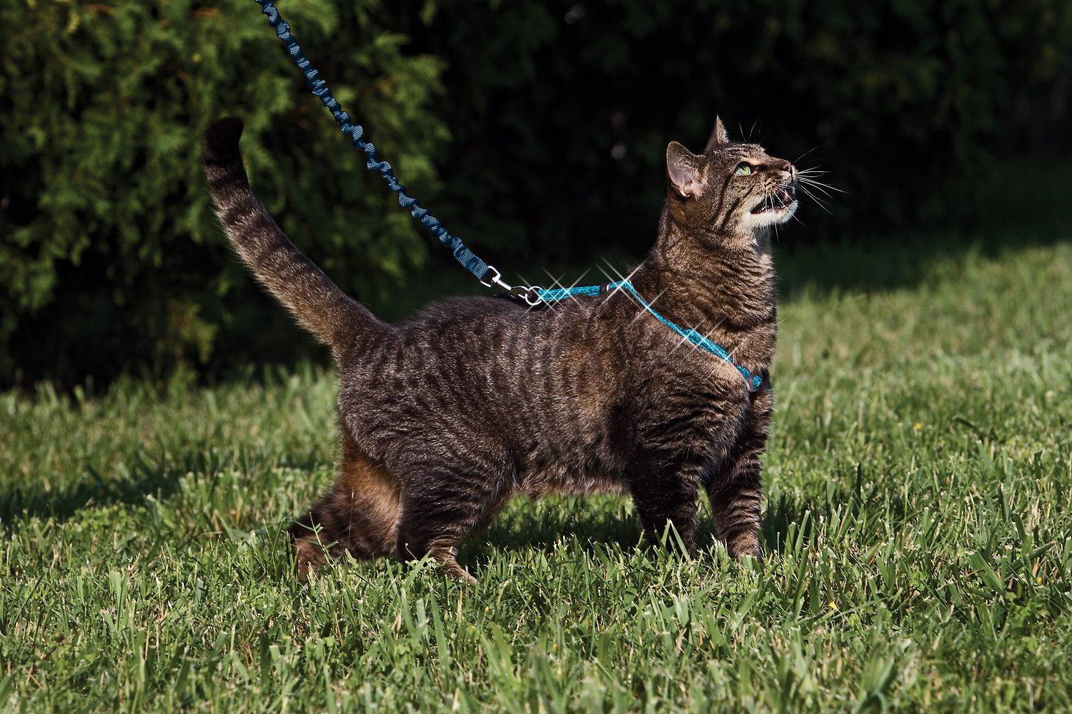 Petsafe Come With Me Kitty Glitter Harness Amp Bungee Cat