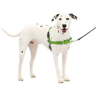 PetSafe Easy Walk Dog Harness, Apple Green, Medium/Large