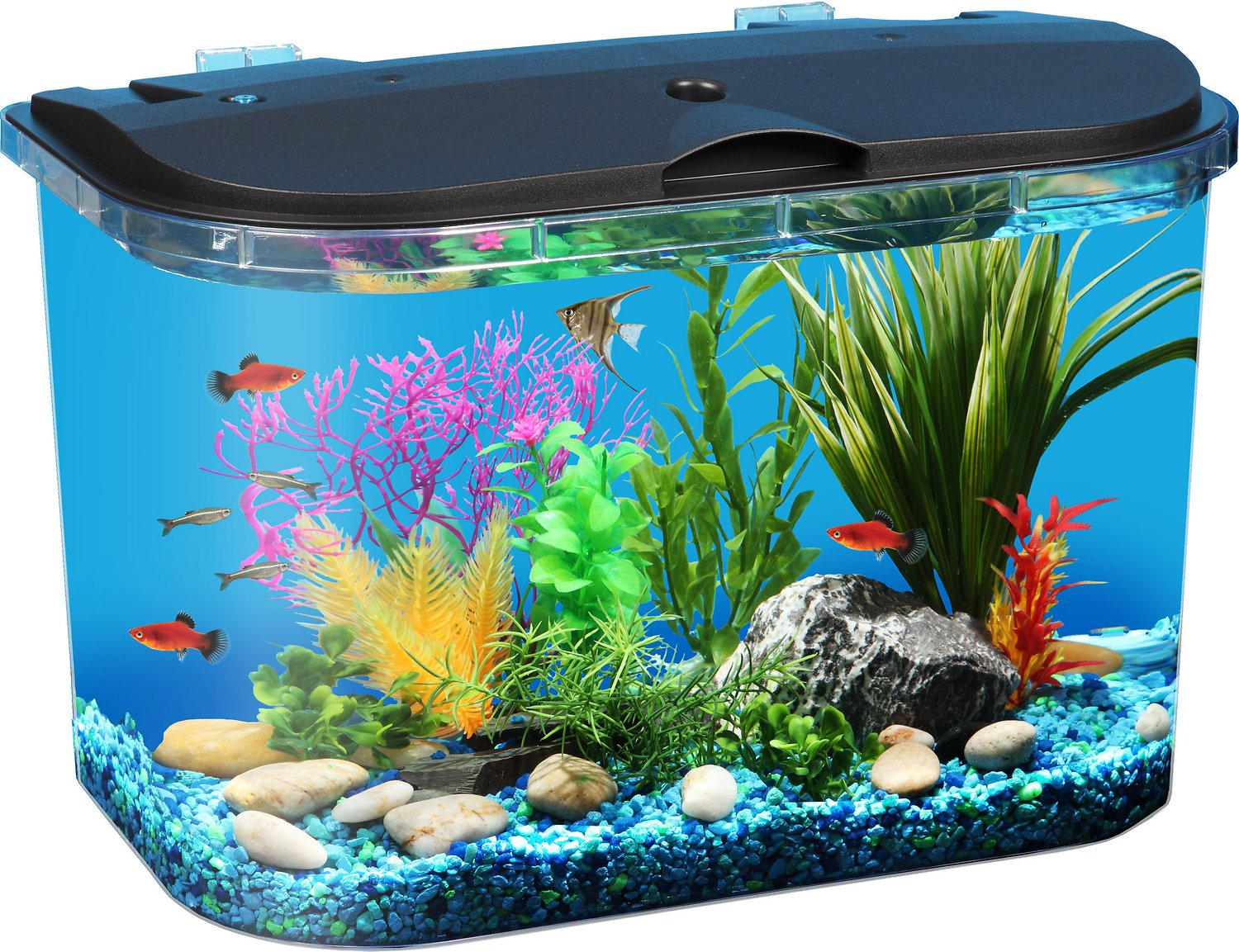 Aquarium fish tank starter kit - Api Aquariums Tropical Panaview Aquarium Starter Kit 5 Gallon Chewy Com