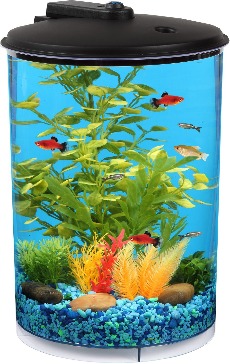 Koller Products Tropical 360 View Aquarium Starter Kit, 3-gal - Chewy.com