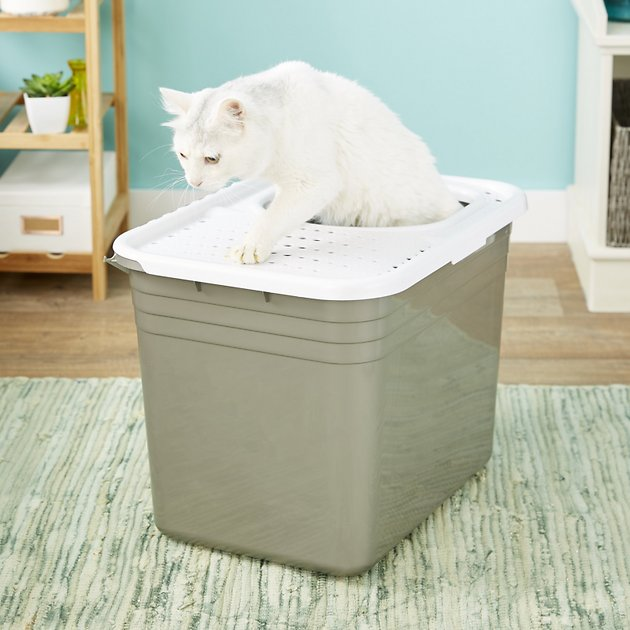 Petmate Top Entry Litter Pan Chewy Com