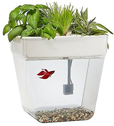 Back to the roots water garden fish tank 3 gallon for Garden with fish tank