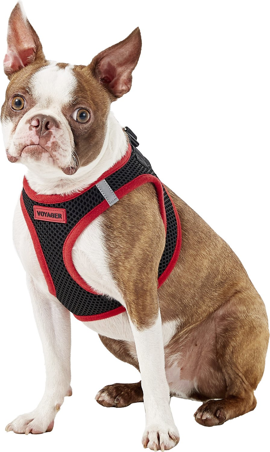 Best Pet Supplies Voyager All Season Pet Harness Red