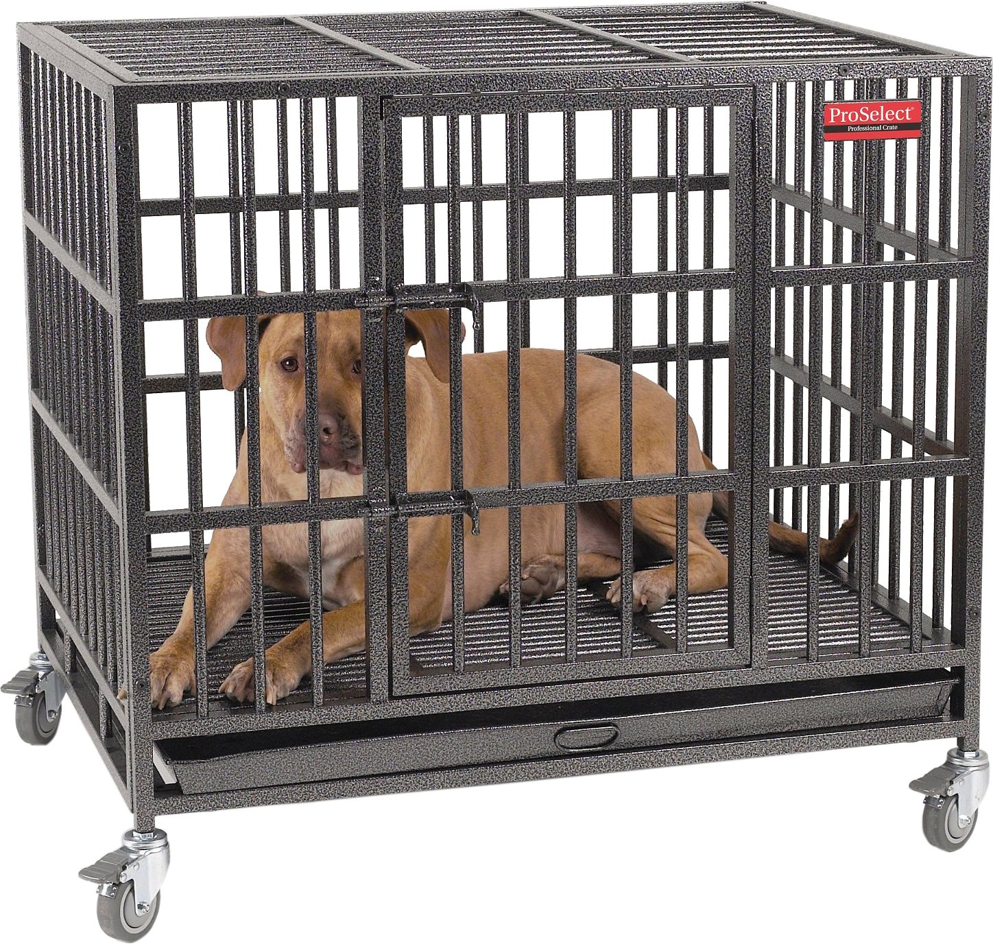 Proselect empire dog cage medium chewycom for Large dog cages for sale cheap