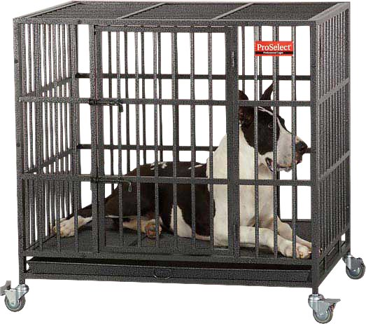 ProSelect Empire Dog Cage, Large - Chewy.com
