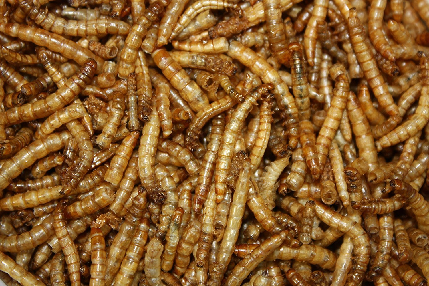 Worms In Dog Food