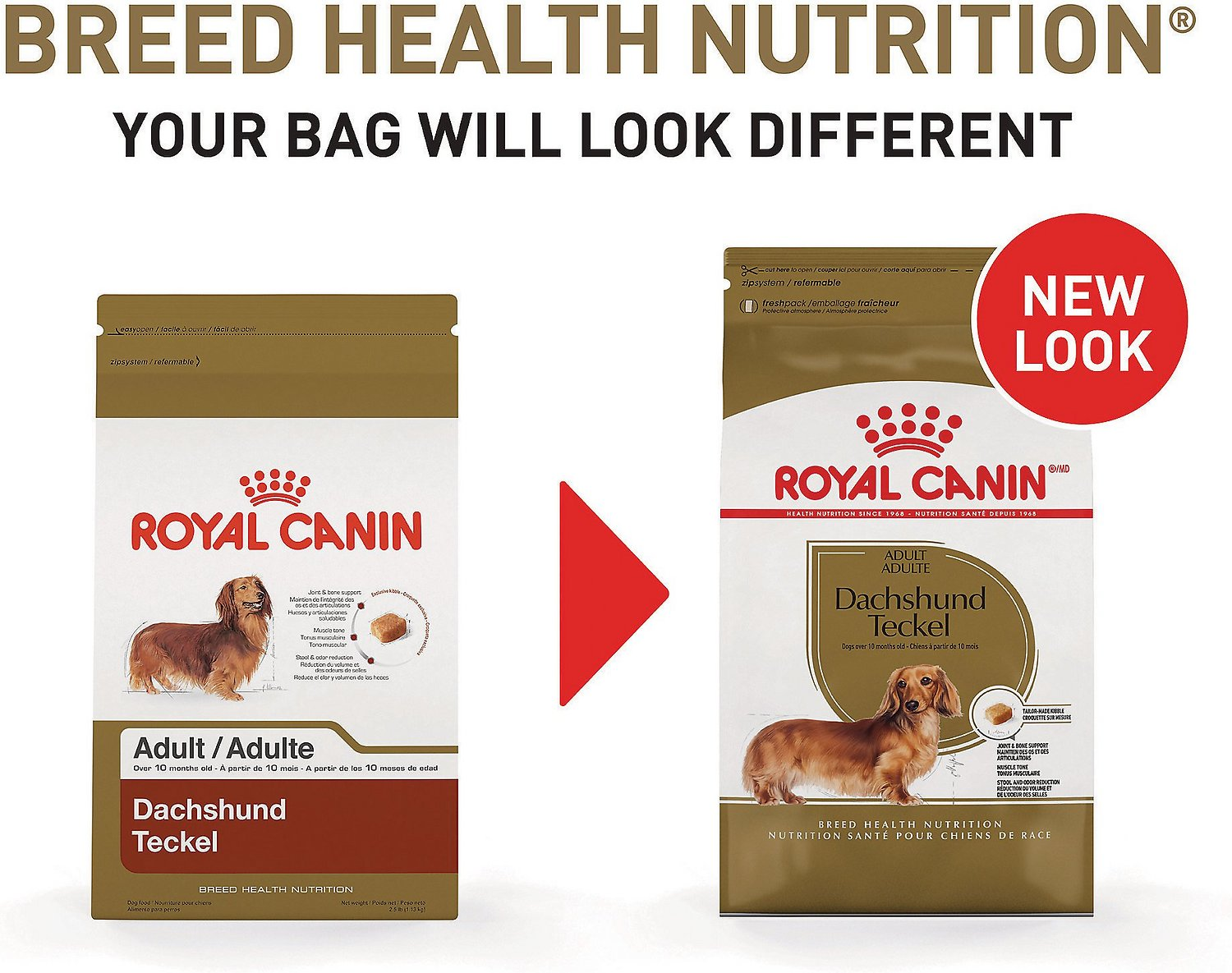 royal canin dachshund adult dry dog food 2 5 lb bag. Black Bedroom Furniture Sets. Home Design Ideas