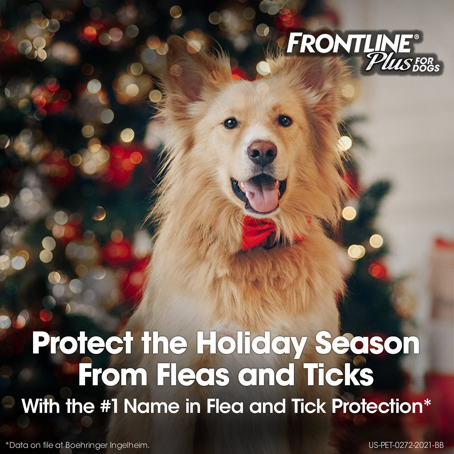 Frontline Plus Flea Amp Tick Treatment For Dogs 45 88 Lbs