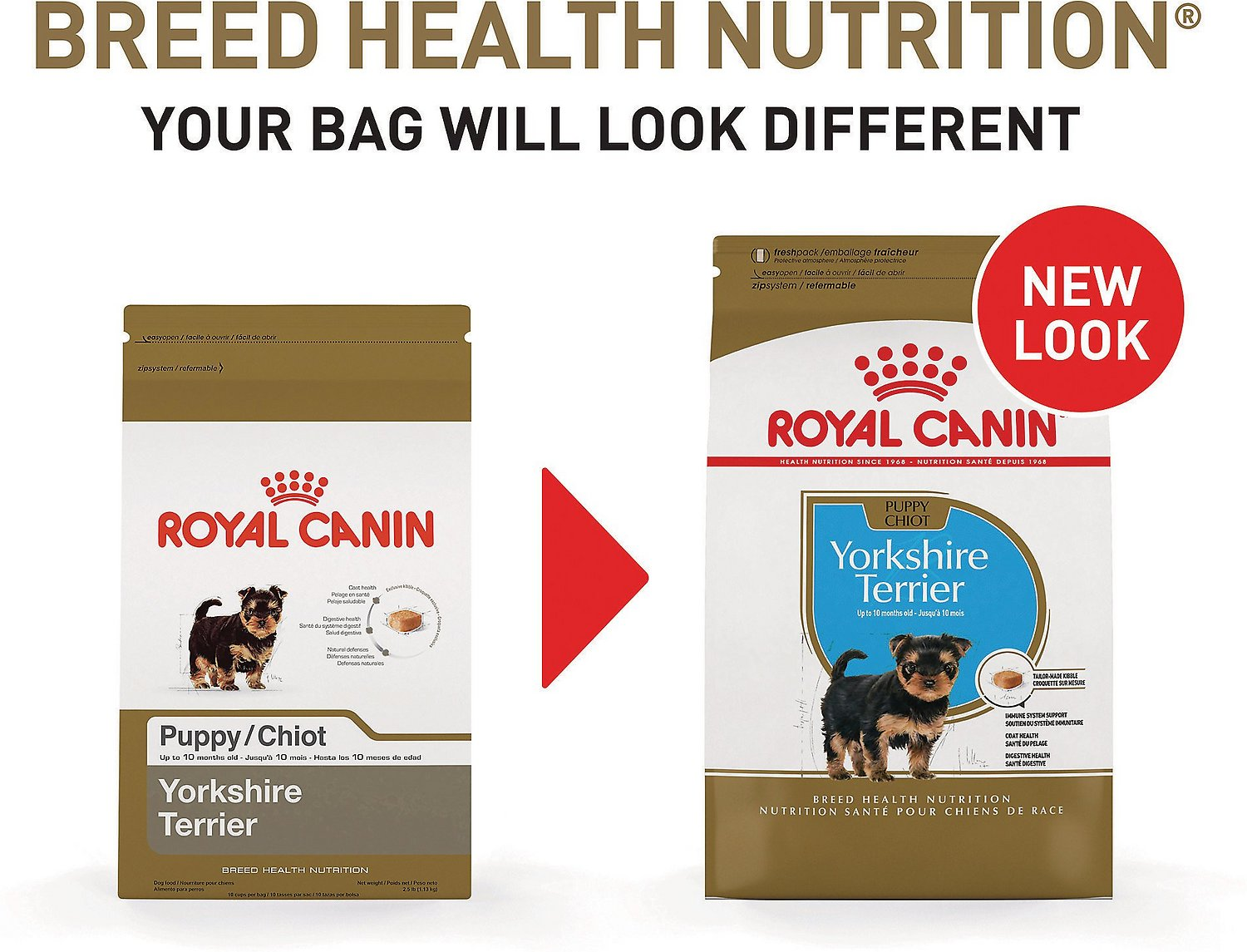 Royal canin yorkshire terrier puppy dry dog food 25 lb bag video nvjuhfo Choice Image