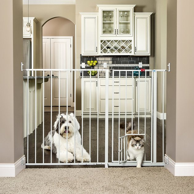 Carlson Pet Products Maxi Extra Tall Walk Thru Gate With