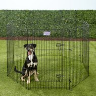 MidWest Exercise Pen with Step-Thru Door, Black E-Coat, 36-inch