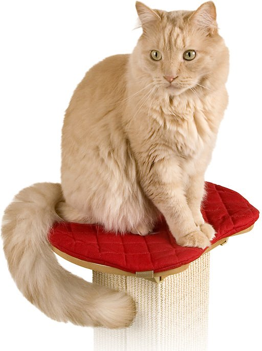 pioneer pet smartcat the ultimate scratching post. smartcat the ultimate post perch pad pioneer pet smartcat scratching a