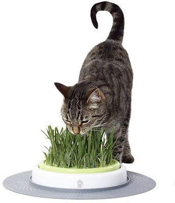 Catit Design Senses Grass Garden Kit Chewy Com