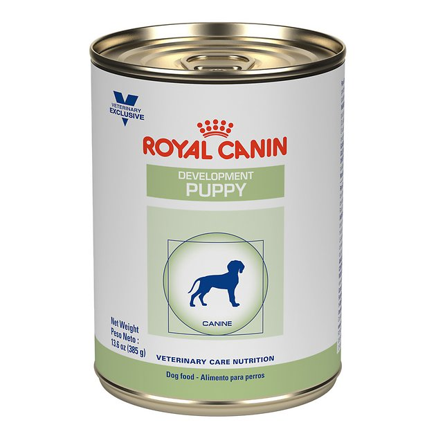 Royal Canin Canned Food Cat