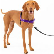 PetSafe Easy Walk Dog Harness, Purple/Black, Medium