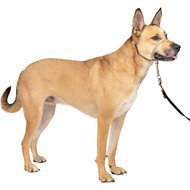 PetSafe Premier Gentle Leader Quick Release Dog Headcollar, Fawn, Medium