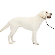 PetSafe Premier Gentle Leader Quick Release Dog Headcollar, Fawn, Large