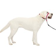 PetSafe Premier Gentle Leader Quick Release Dog Headcollar, Raspberry, Large