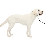 PetSafe Premier Gentle Leader Quick Release Dog Headcollar, Silver, Large