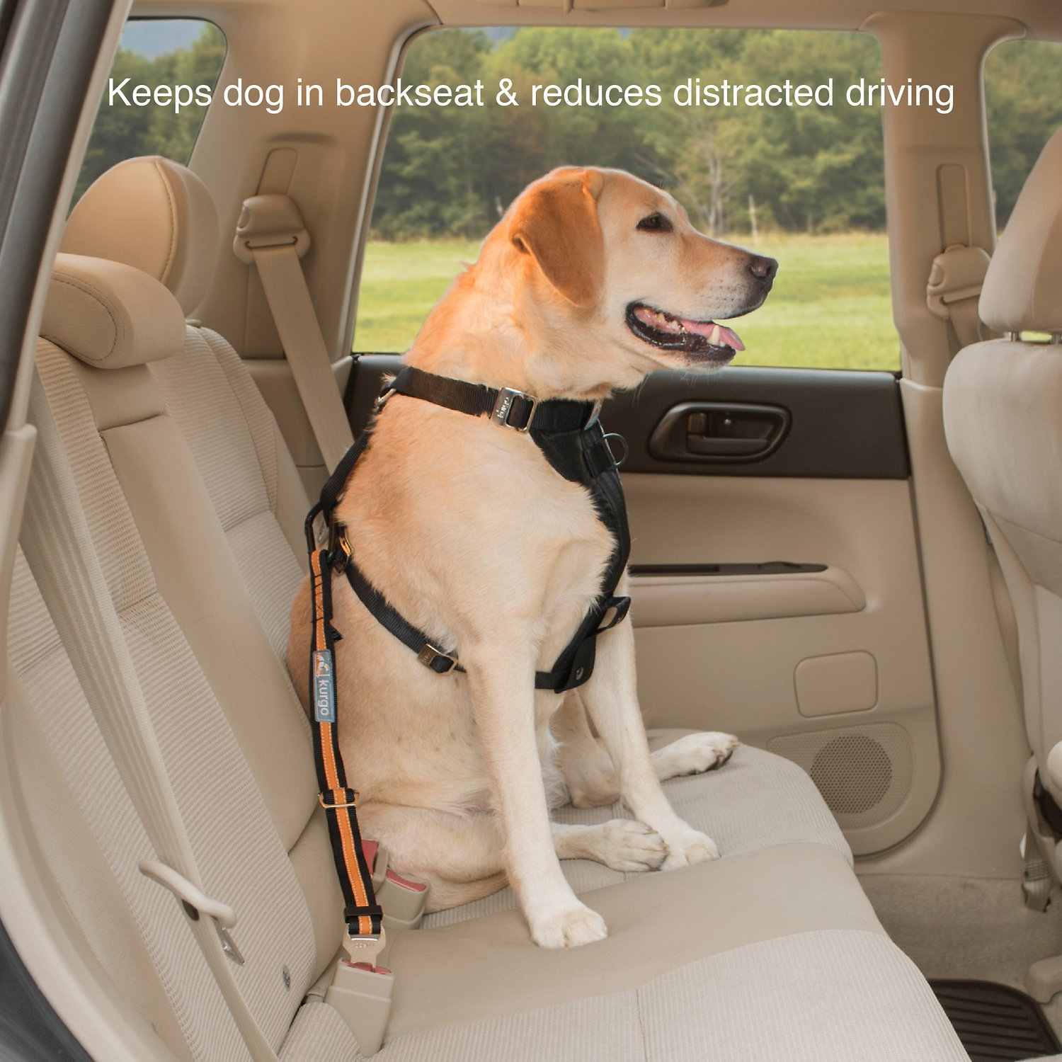 Kurgo Direct To Seat Belt Tether Chewy Com