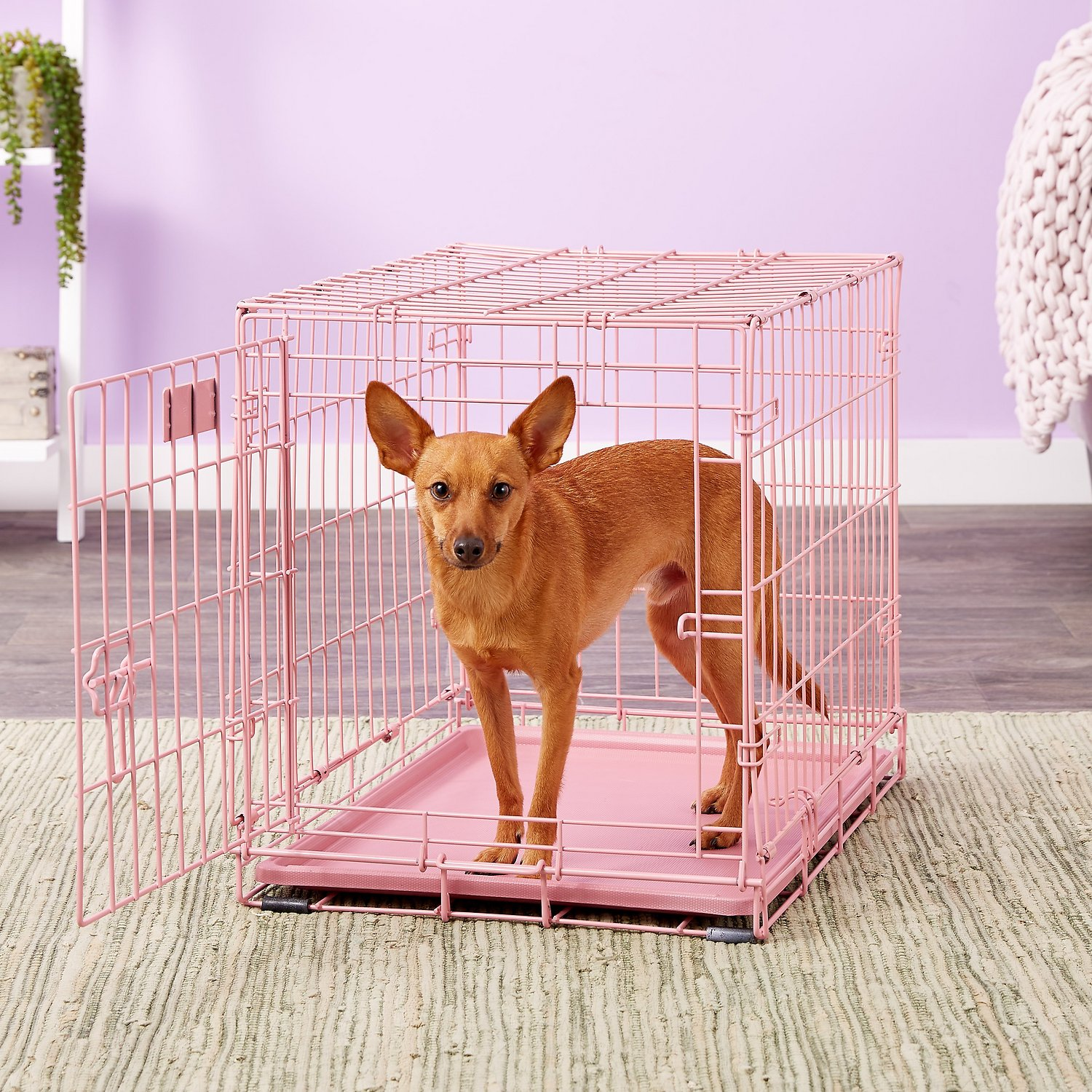 midwest icrate single door dog crate pink in  chewycom -
