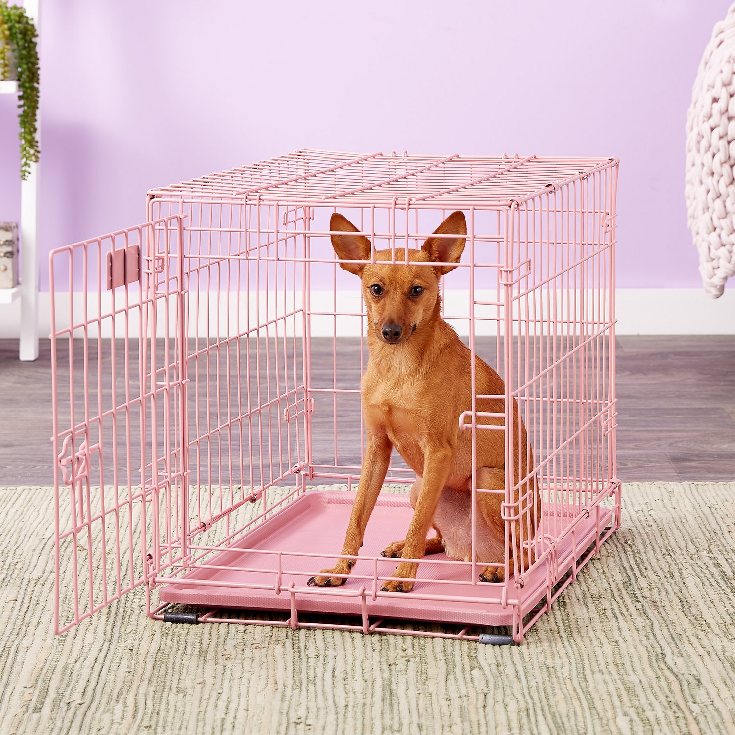 Midwest Icrate Single Door Dog Crate, Pink