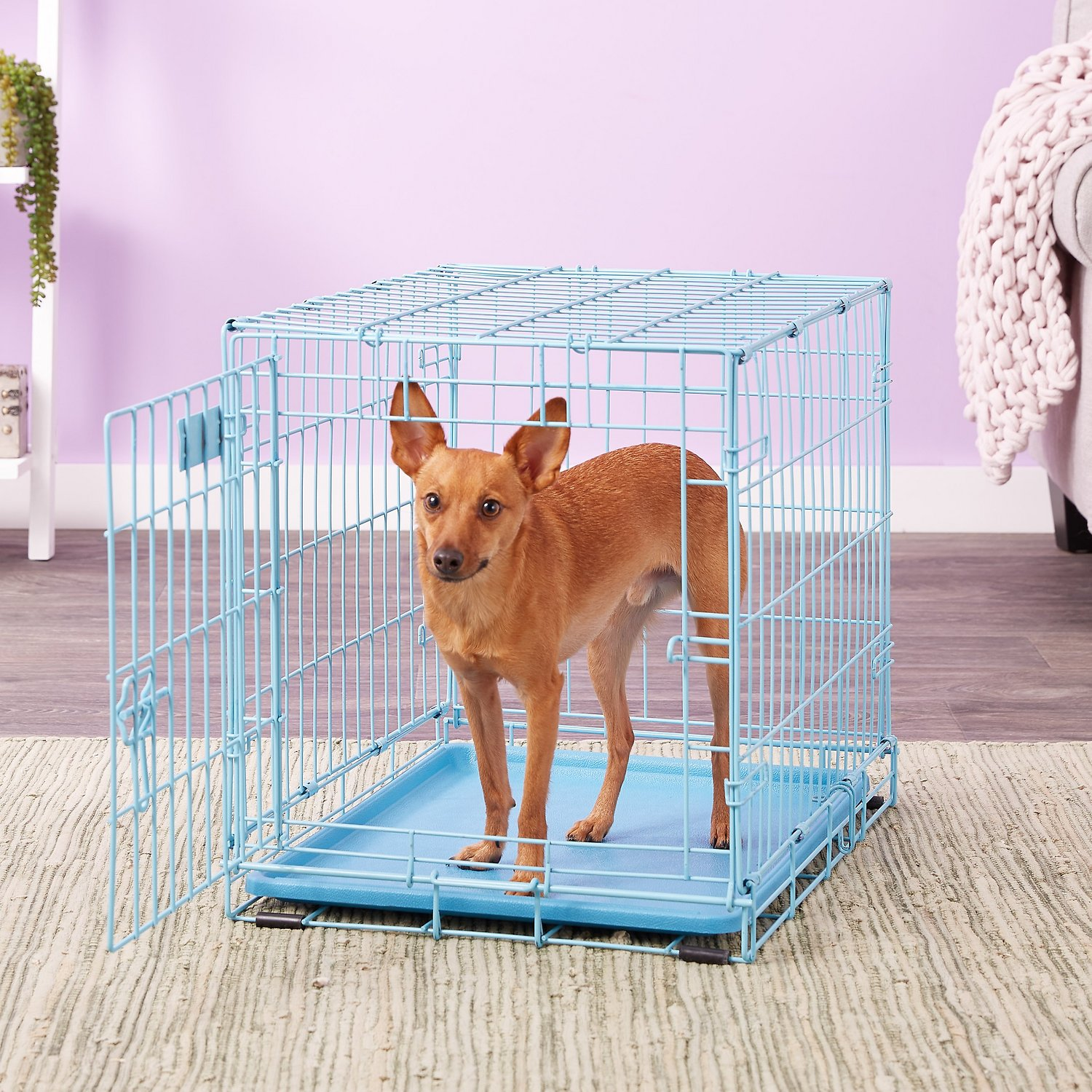midwest icrate single door dog crate blue in  chewycom -