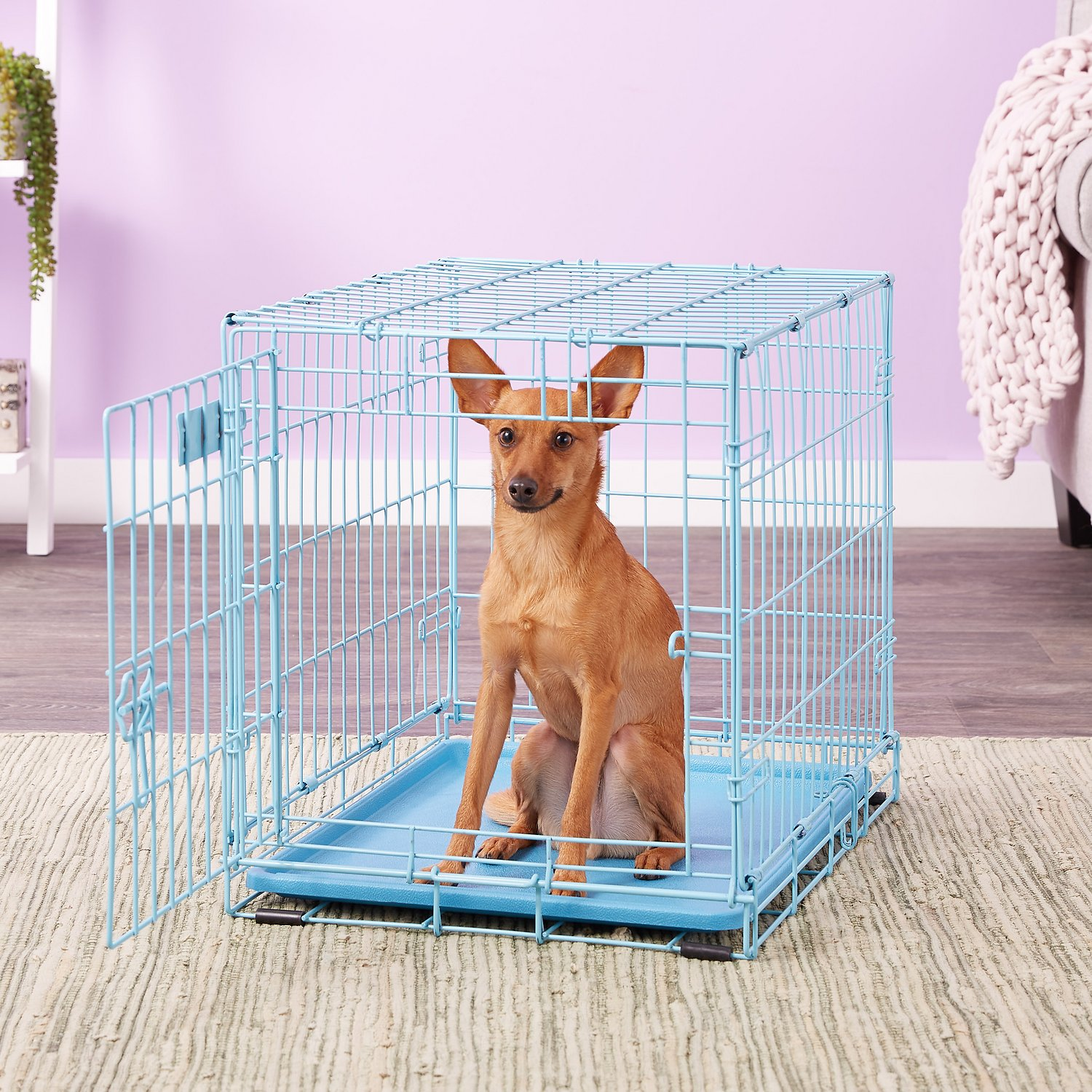Midwest Icrate Single Door Dog Crate Blue 24 In Chewy Com