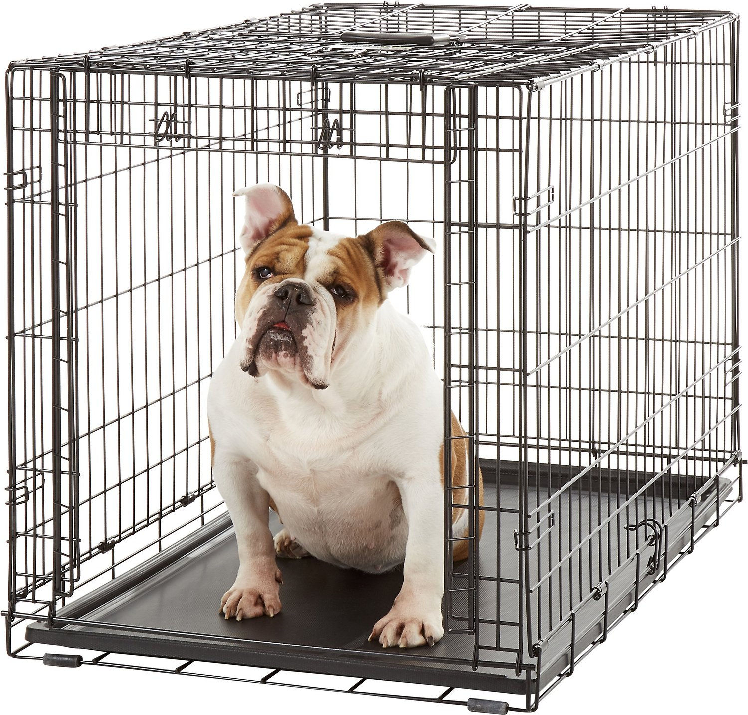 Midwest Ovation Single Door Dog Crate 36 In Chewy