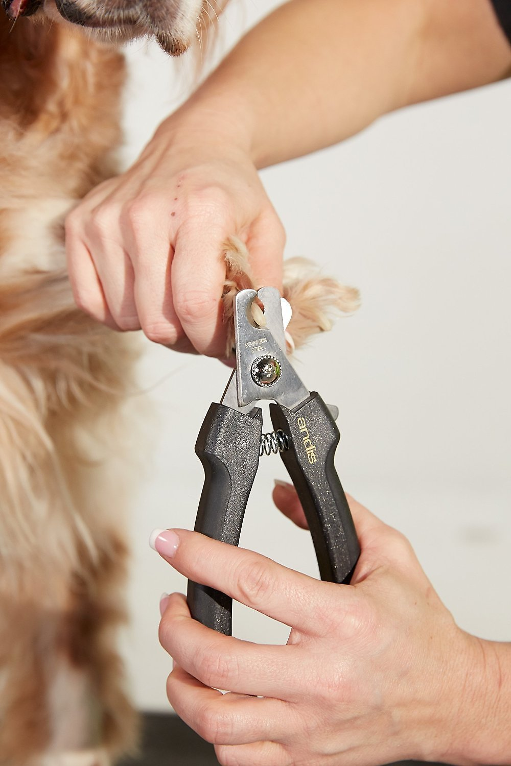 Andis Premium Dog Nail Clipper, Large - Chewy.com
