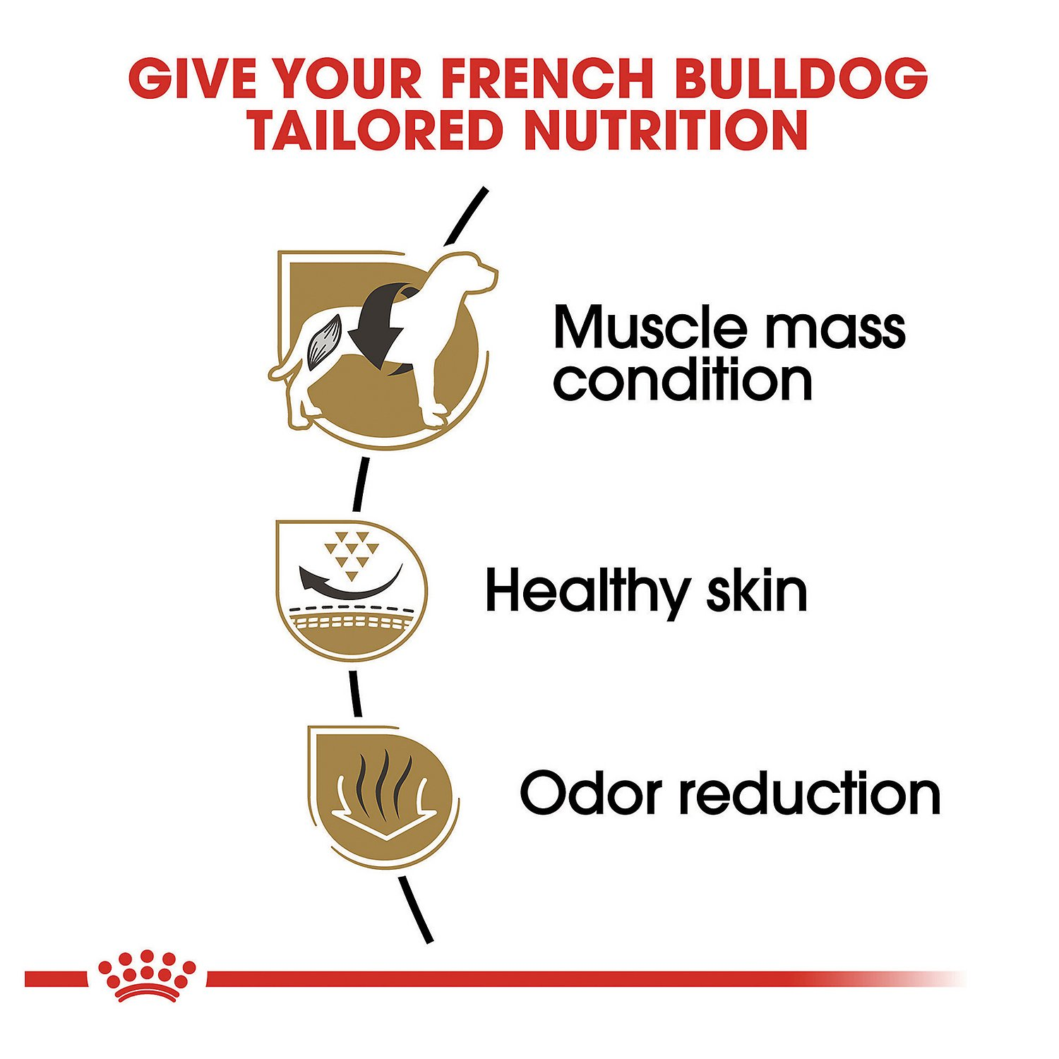 how to say canin french