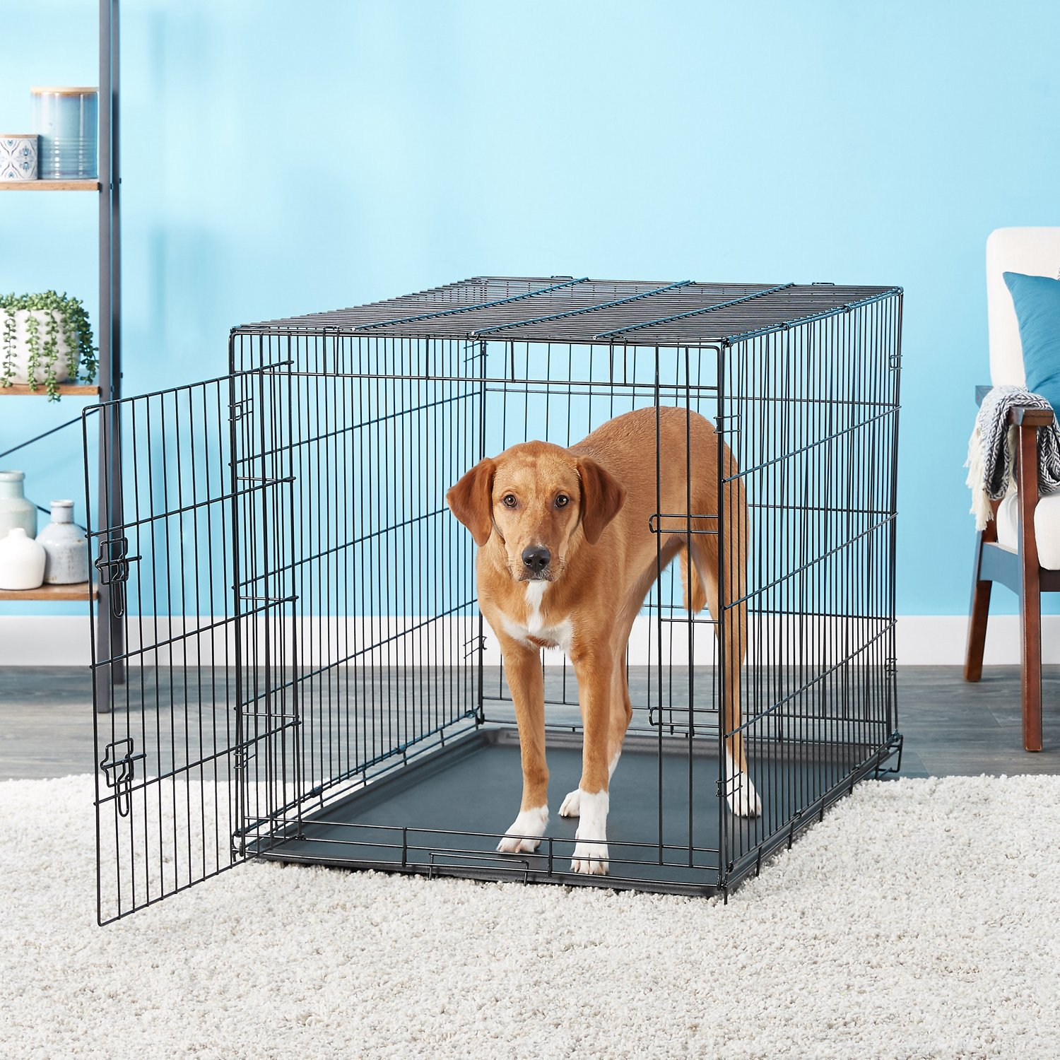 Carlson Pet Products Secure & Compact Single Door Wire Dog Crate, X ...