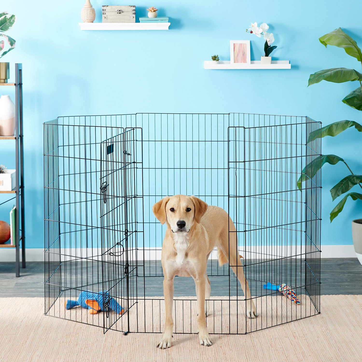 Petmate 8 Panel Wire Exercise Pen with Door, Black, X-Large - Chewy.com