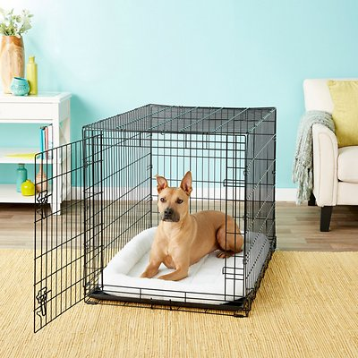 Frisco Fold Amp Carry Single Door Dog Crate 42 In Chewy Com