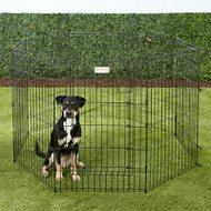 MidWest Exercise Pen with Full MAXLock Door, Black, 36-inch