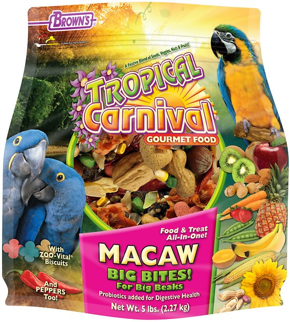 Image result for tropical carnival bird food