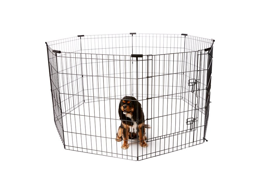 Frisco Dog Exercise Pen With Step Through Door Black 30 In Chewy