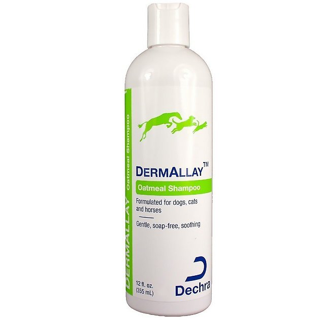 Dermallay Oatmeal Shampoo For Dogs Cats Horses 12 Oz Bottle Chewy Com