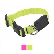 Nite Ize NiteDawg X-Small LED Light-Up Dog Collar, Neon Yellow