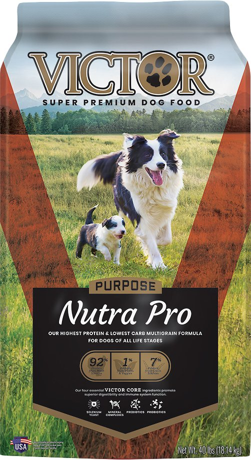 best food for german shorthaired pointer