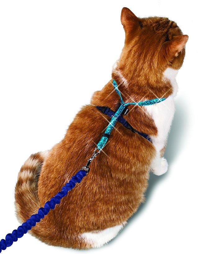 petsafe cat harness instructions