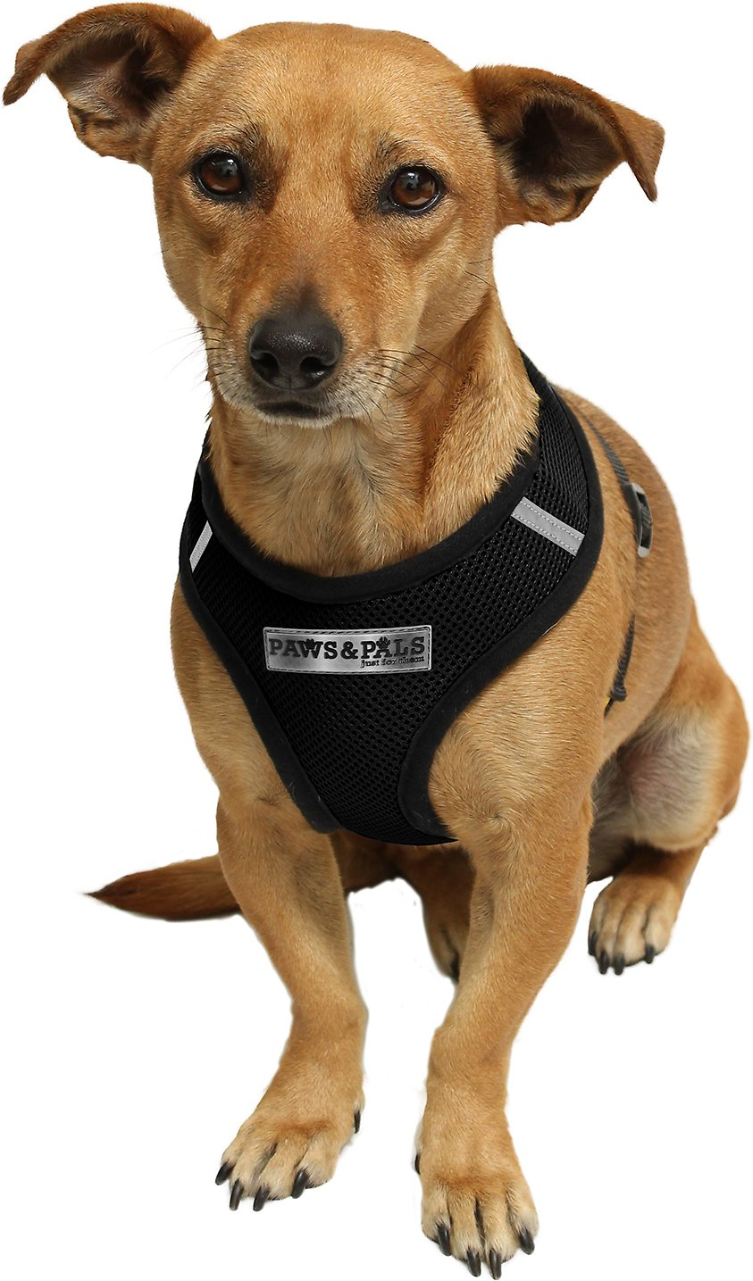House Of Paws Dog Harness - Wiring Diagram For Light Switch •