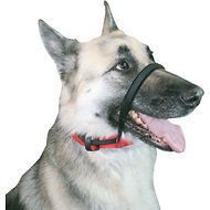 Sporn Head Control Dog Halter, Black, Large