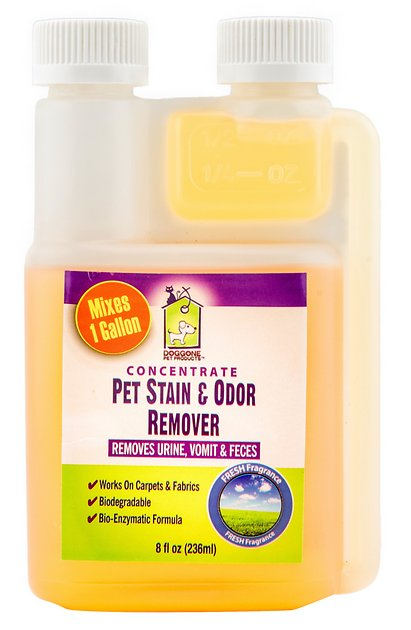 doggone pet products pet stain urine odor enzymatic concentrate cleaner 8 oz bottle. Black Bedroom Furniture Sets. Home Design Ideas